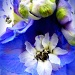 Art in Bloom by denisedaly