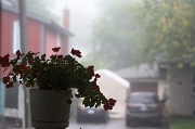 11th Aug 2012 - nebel meaning fog