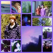 14th Aug 2012 - purple