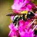 Pollen Count by cdonohoue