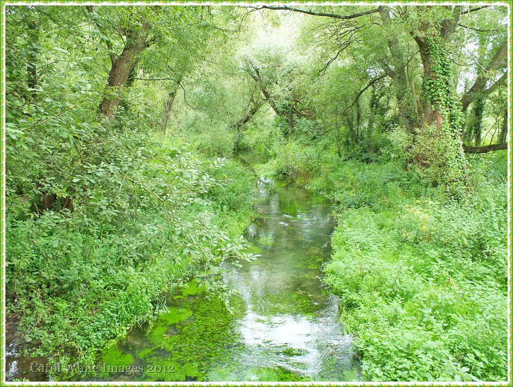Nature Trail by carolmw