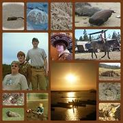17th Aug 2012 - brown