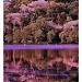 Swan lake  by jesperani