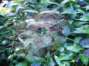 17th Aug 2012 - Oh what Web we Weave