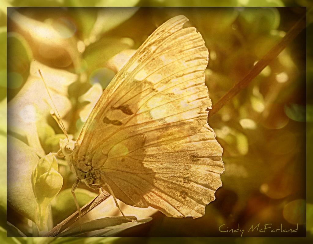 Sunning Butterfly by cindymc