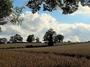 19th Aug 2012 - Cornfields.