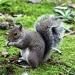 Squirrel by hjbenson