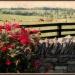 Postcard from Kentucky by cindymc
