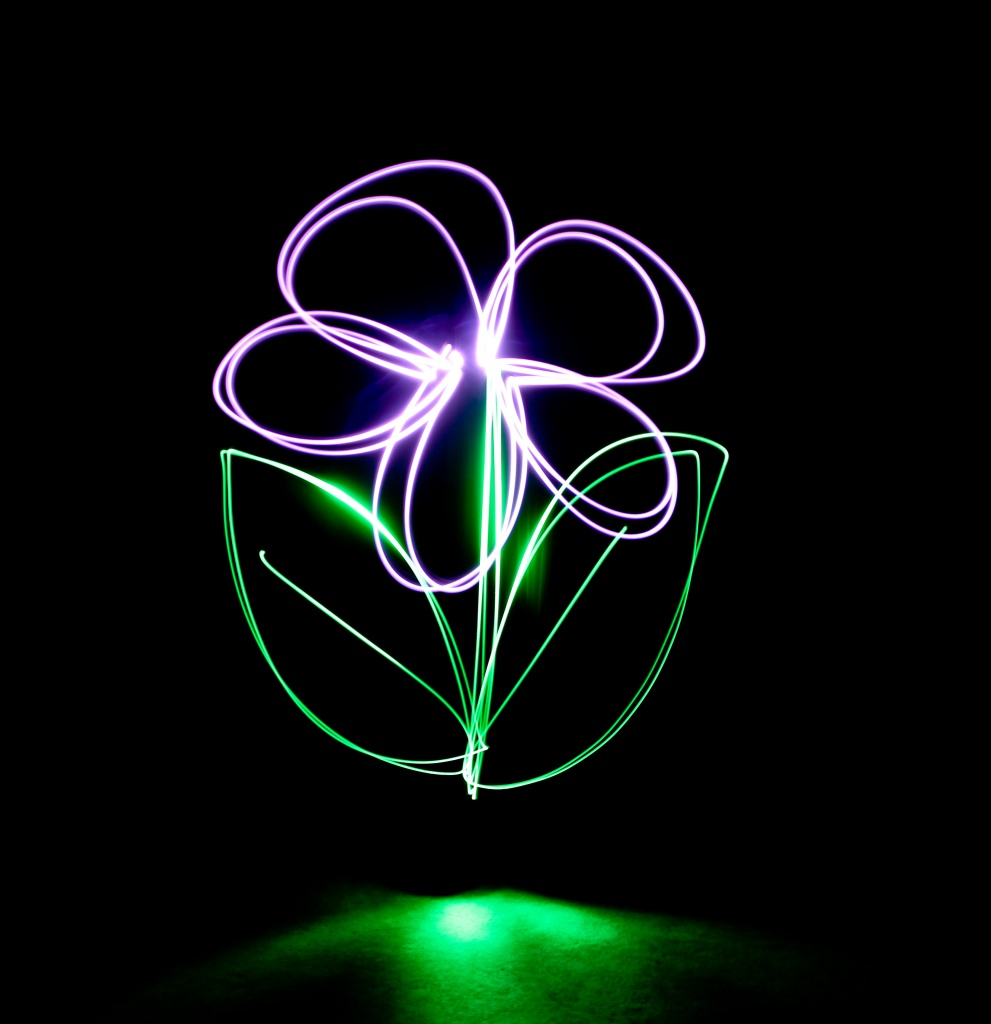 Unknown flower by abhijit
