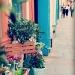 Bridge Street Florist by judithg