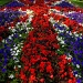 Union flower bed by boxplayer