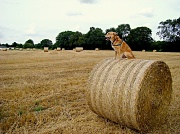 23rd Aug 2012 - Hay - Get off there!