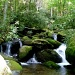 Mountain Stream by calm