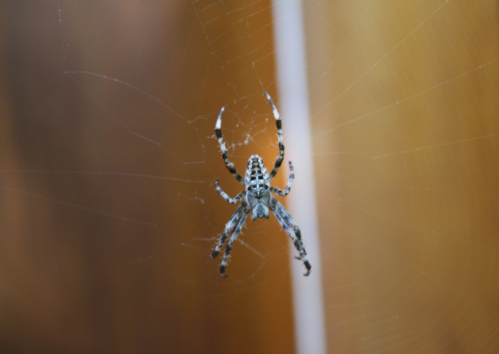 Good morning Mr. Spider by bruni