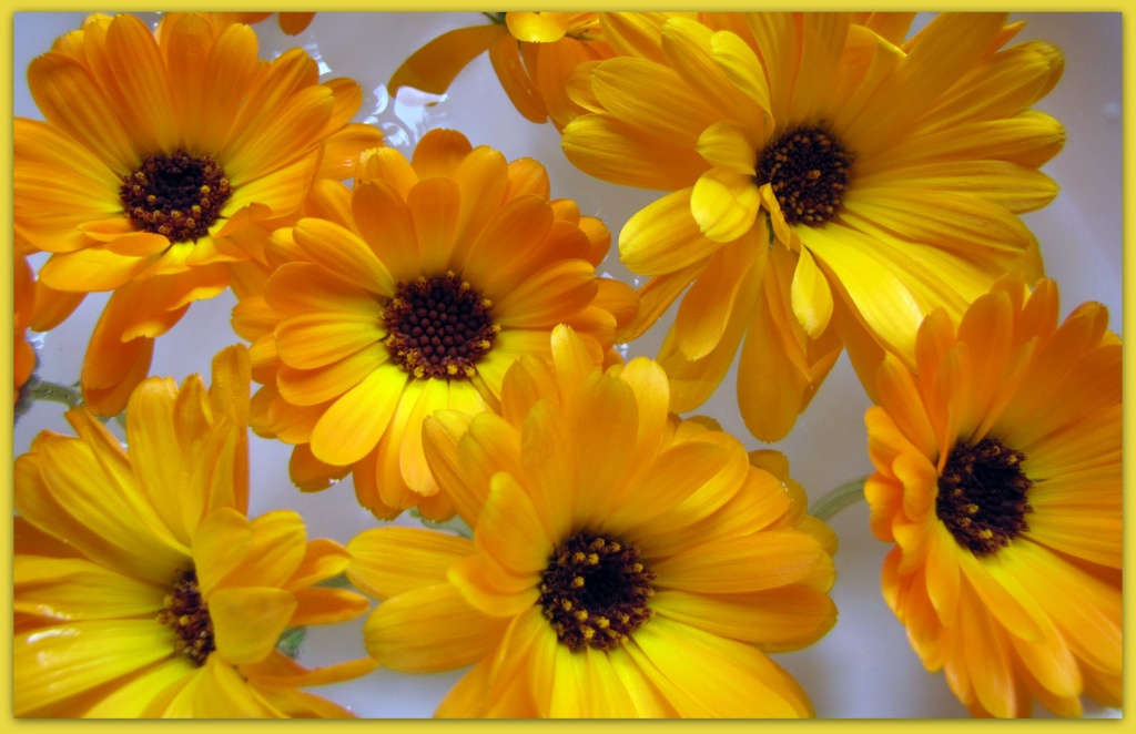 Marigolds by busylady