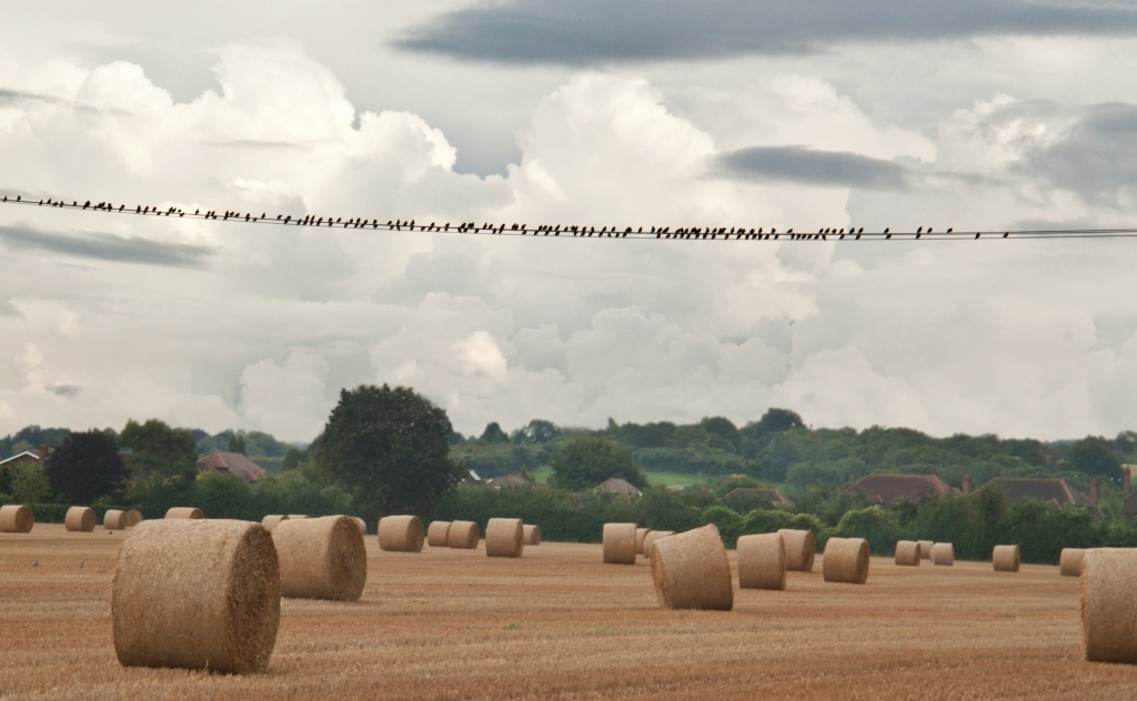 Of stormy skies, starlings, and straw bales. by dulciknit
