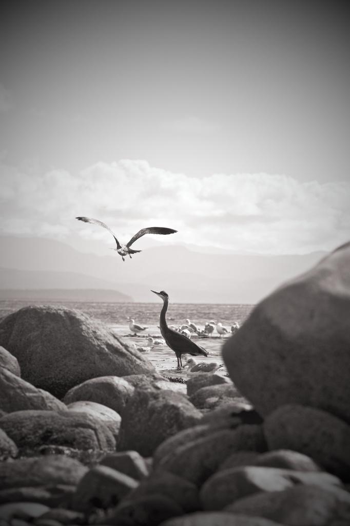 Bird Buddies by kwind