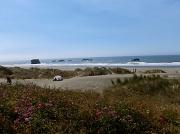 29th Aug 2012 - Near Cape Sebastian 3
