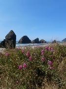 30th Aug 2012 - Near Cape Sebastian 4