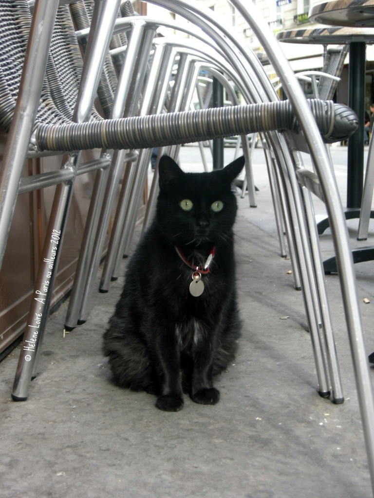 The cat at the café by parisouailleurs