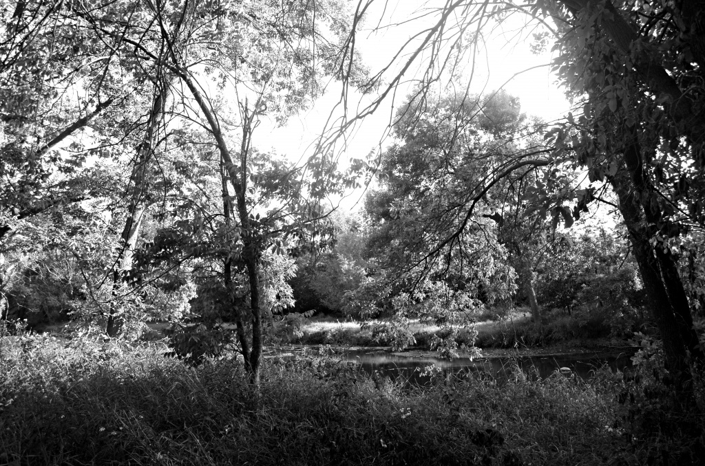 Get Pushed Challenge - Landscape - B&W         (If you have a moment please view large) by myhrhelper