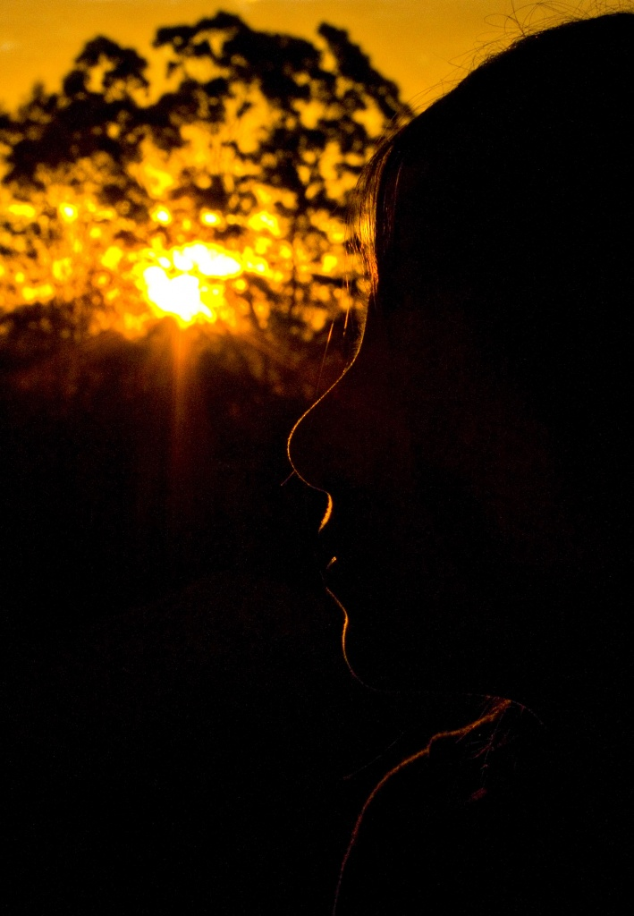 sunset silhouette by corymbia