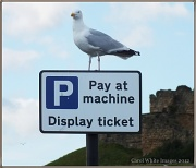 """1st Sep 2012 - """"Have You Paid And Displayed?!"""""""