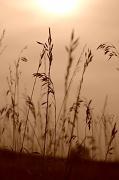 1st Sep 2012 - Wheat Field