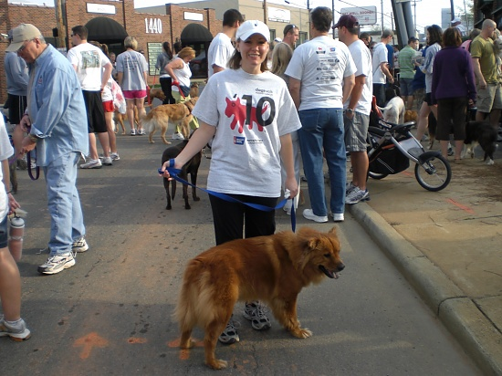 Dogswalk for Cancer by peggysirk