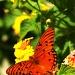 Butterfly by skipt07