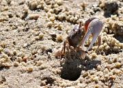 3rd Sep 2012 - A crab and his home.