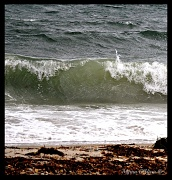 5th Sep 2012 - Surfs up.......................