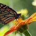 Sculpture Garden Butterfly by juletee