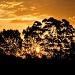 sunset soon forgotten by corymbia