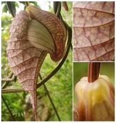 8th Sep 2012 - If Plants Had Brains