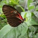 Butterfly`s week  by pyrrhula