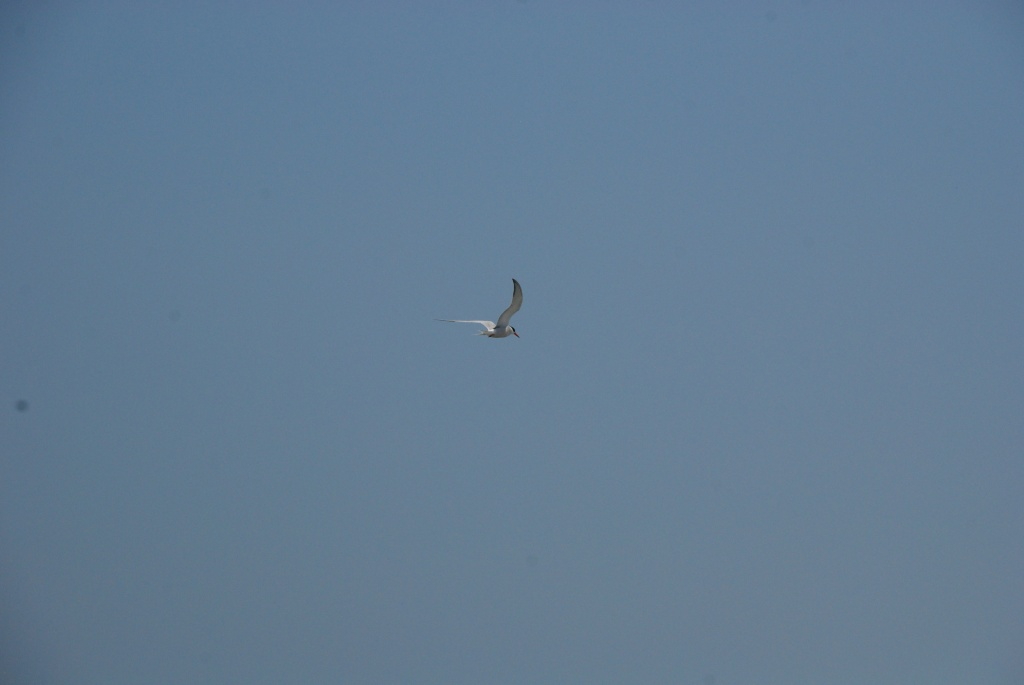 September 9 2012 seagull 02 by mgbio