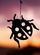10th Sep 2012 - (Day 210) - Ladybug Silhouette