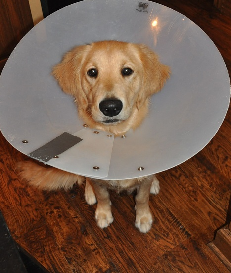 the cone of shame by bcurrie