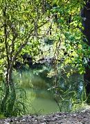 15th Sep 2012 - Tingalpa Creek
