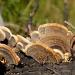 Fungus by salza