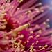 Corymbia by corymbia