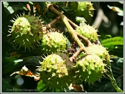 17th Sep 2012 - Conker Time