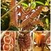 Atlas Moth, At Last by myautofocuslife