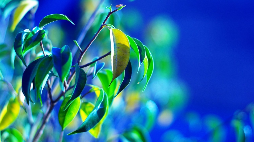 (Day 216) - Yellow, Green, and Blue by cjphoto