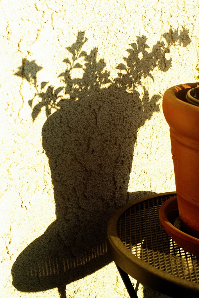 (Day 217) - Potted Shadow by cjphoto