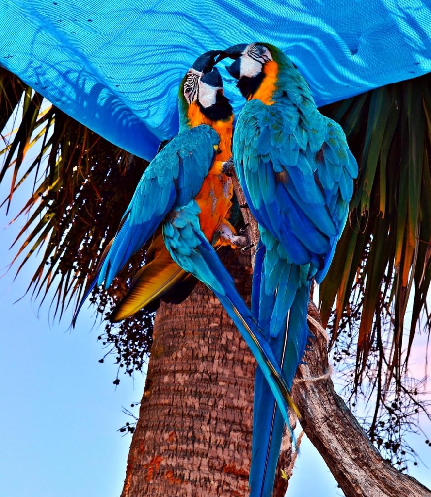 Macaws at the Marina by soboy5