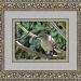Mockingbird by stcyr1up