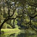 Pastoral late September scene at the state park, Charleston, SC by congaree