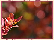 24th Sep 2012 - Bush & bunches of bokeh